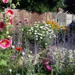 Colourful mixed border June