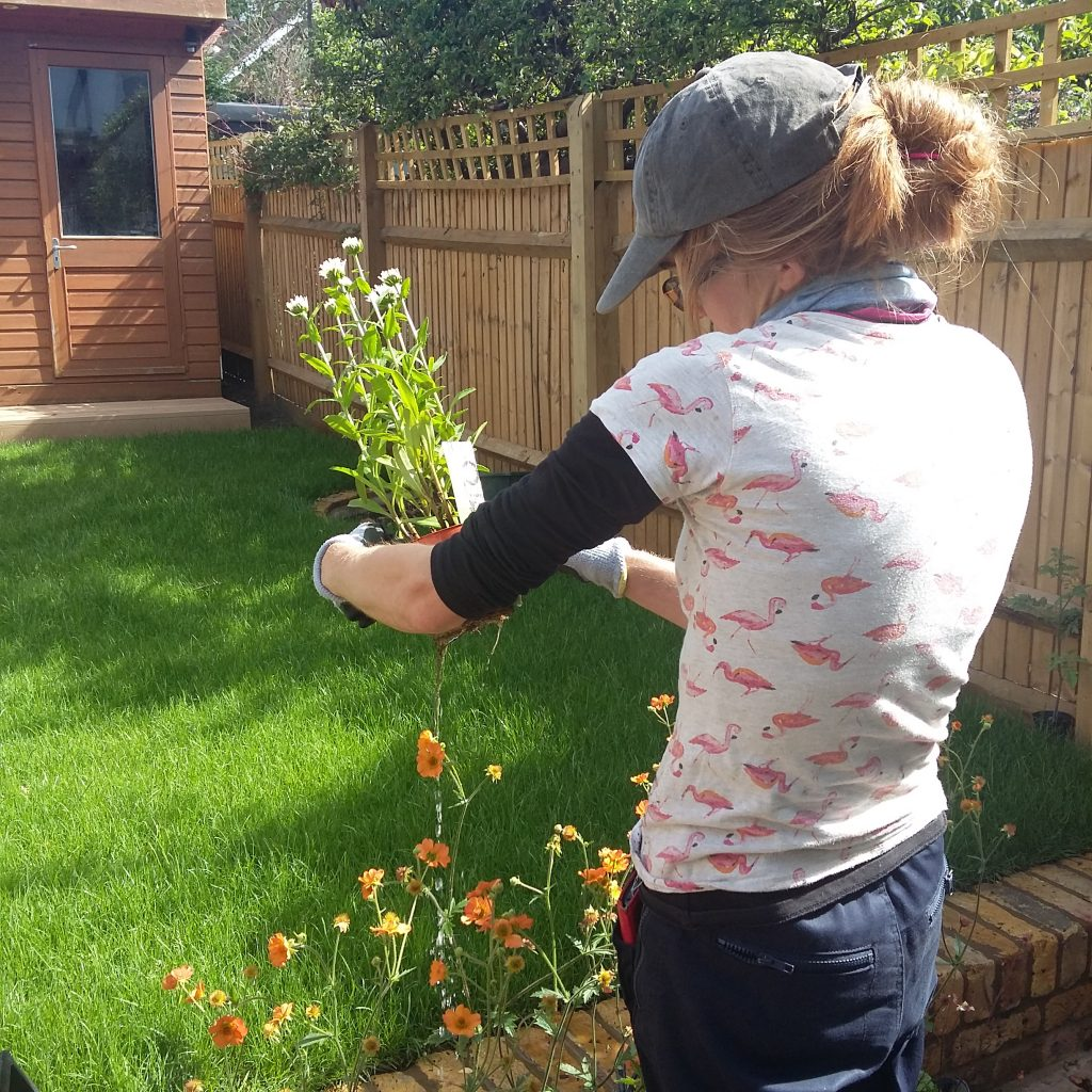Kate from TW1 Gardening inspects specimen prior to planting