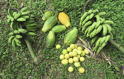 BananasPapayaLemons by .