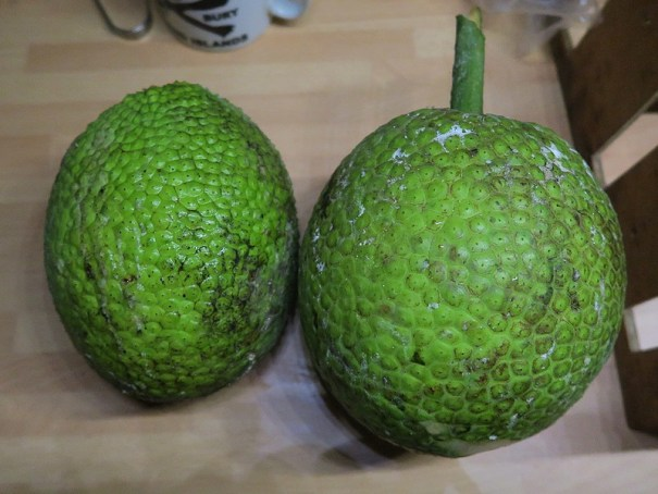 breadfruit on the bench by .