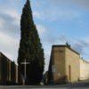 Firenze: cinghiali invadono cimitero Trespiano, custode chiama 113