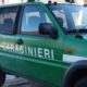 Arezzo: formaggi da animali malati. Sequestrati mille capi di bestiame