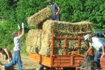Operai agricoli: aumento del 2,9%, rinnovato il contratto