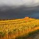 Toscana, meteo, previsioni del Lamma fino a domenica 25 novembre