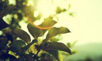 In Italia il 28% delle PMI del settore agroalimentare vede la sostenibilità come strategia per un vantaggio competitivo.