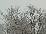 arrtist date freezing rain 3