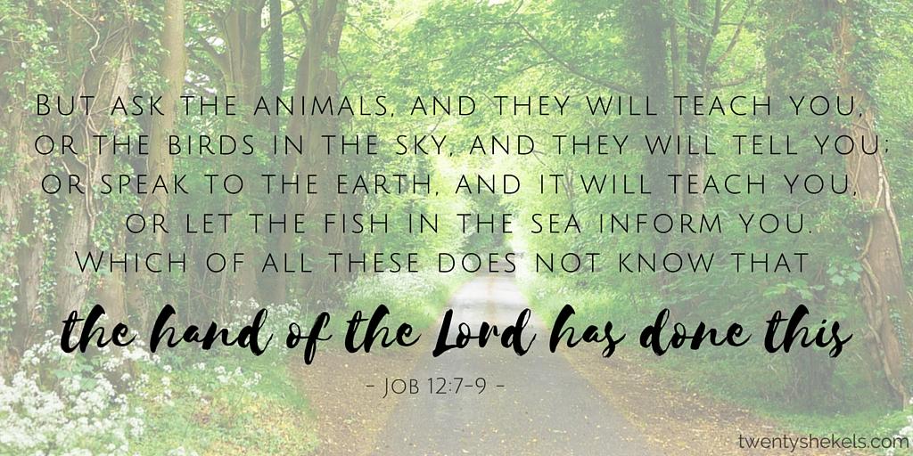 Job 12:7-9