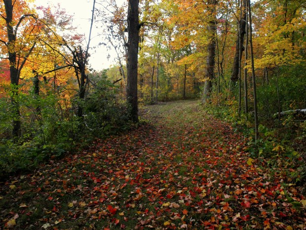 A trail at Wild River State Park is filled with fallen autumn leaves Oct. 1, 2011. (Pioneer Press: Andy Rathbun)