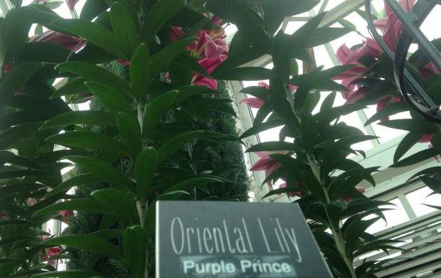3-PrinceLily1