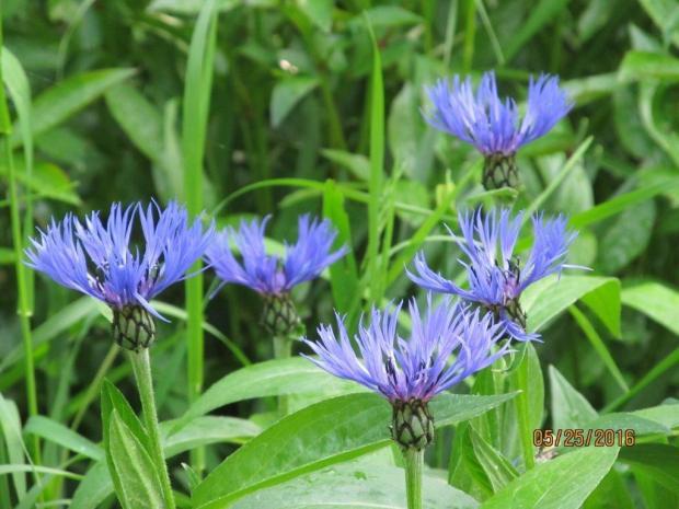 160605bbcut-flower2