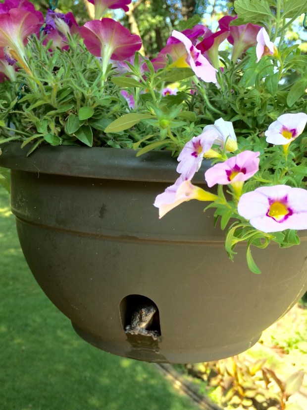 """See world ... Gail of Inver Grove Heights: """"Ran across my new neighbor while out watering my flowers. Guess he likes his new condo!"""""""