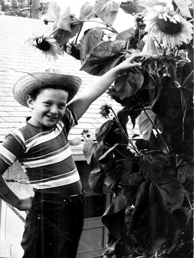 160917bbcut-sunflowersthen