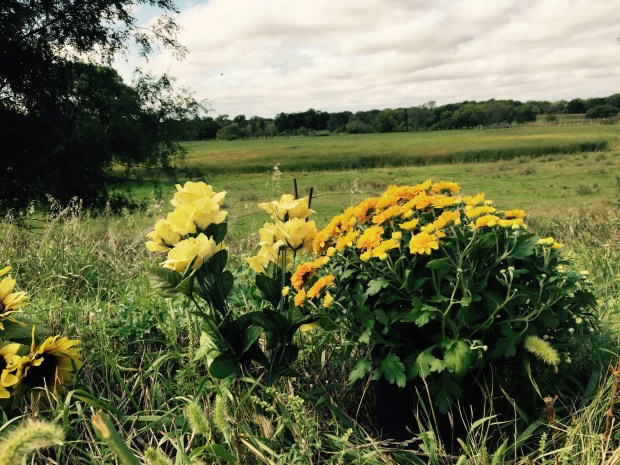 Flowers stand along the road Monday, Sept. 5. 2016, overlooking the site where the remains of Jacob Wetterling were found near Paynesville, Minn. Wetterling, 11, was abducted near his home in St. Joseph, Minn. in Oct. 1989. (Forum News Service: Carolyn Lange)
