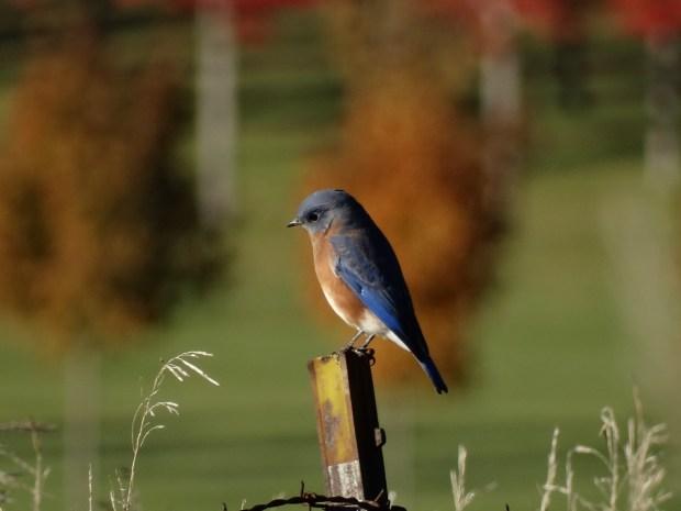 161016bbcut-bluebird3