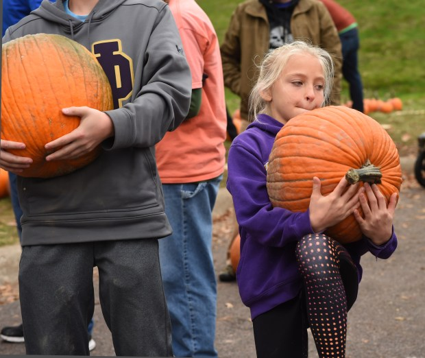 Berit Parten, 11, struggles as she carries her pumpkin to the car at the Downing Family Farm pumpkin stand next to St. Paul's Highland Park water tower, Sunday, October 30, 2016. At left is Nick Parten, 13. (Pioneer Press: Scott Takushi)