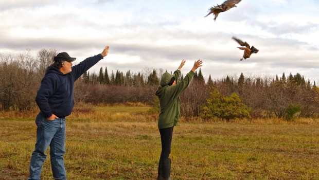 Bird banders Rick Dupont, left, and Trudi Taylor releasing two adult Red-tailed hawks that were just banded near the Knife River in northern Minnesota in 2015. (Photo courtesy Frank Taylor)