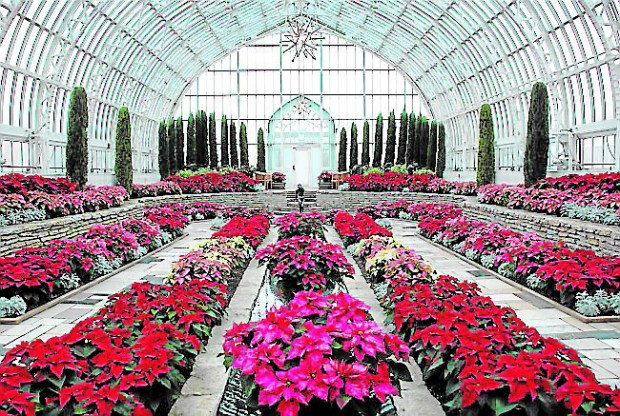 The Como Conservatory abloom for the holidays. (Courtesy photo)