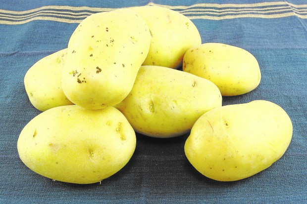 Rich-tasting Yukon Gold potatoes make a tasty side dish. (Dreamstime.com)