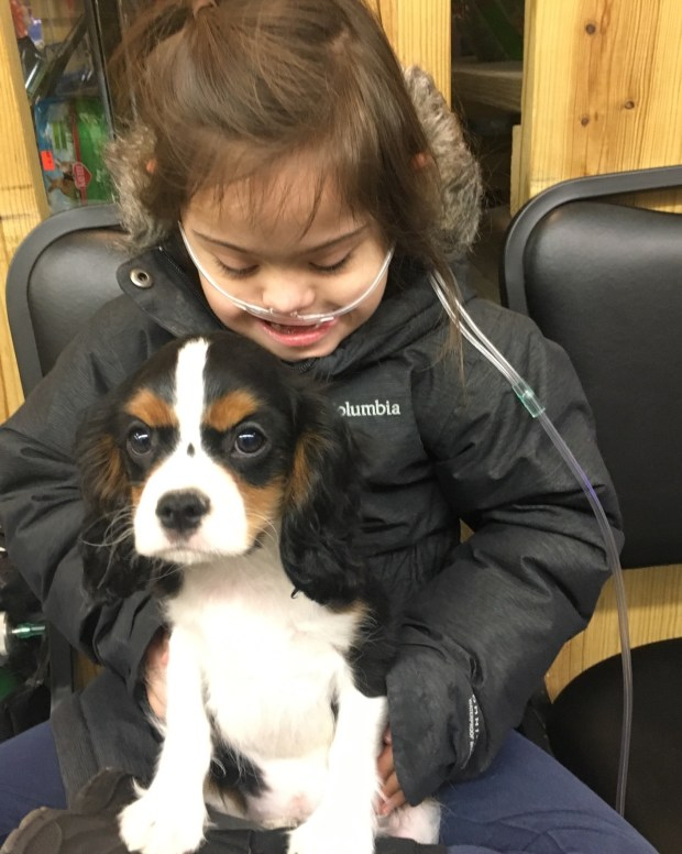Evelyn Olson, 7, gets acquainted with her new King Charles Spaniel, named Charlie, shortly after it was purchased at Har Mar Pet Store in Roseville. The dog has been to the veterinarian five times because of stomach issues since it joined the family in January, according to the family. (Courtesy of Steve Olson)