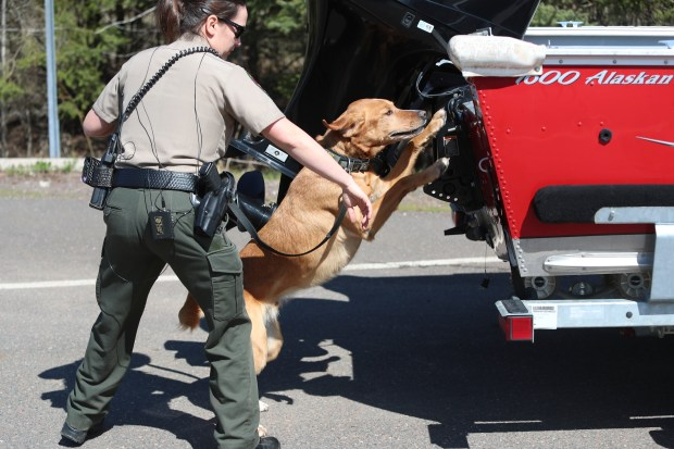 t050417 --- Clint Austin --- 050517.N.DNT.DNRDOGS.C01 --- Minnesota Department of Natural Resources conservation officer Julie Siems uses K-9 officer Brady, a golden retriever mix, to detect zebra mussels in a boat at the Pike Lake boat landing north of Duluth Thursday morning. (Clint Austin / caustin@duluthnews.com)