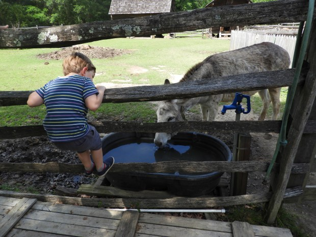 At Latta Plantation, resident critters, including donkeys, horses, sheep, turkeys and chickens, keep young visitors enthralled. (Karen Hansen Gurstelle)