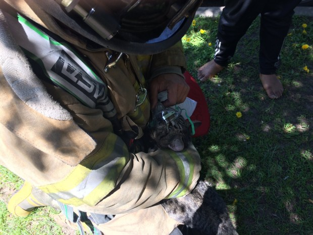 St. Paul firefighters revived two cats after a fire in the 1100 block of East Fourth Street on Thursday, May 11, 2017. (Courtesy of the St. Paul fire department)