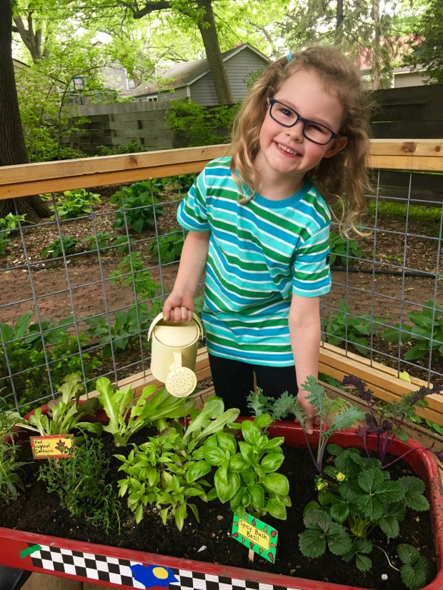 Grace Hunt, 4, waters herbs, lettuce and kale growing in a movable wagon garden. (Courtesy of Donna Erickson)