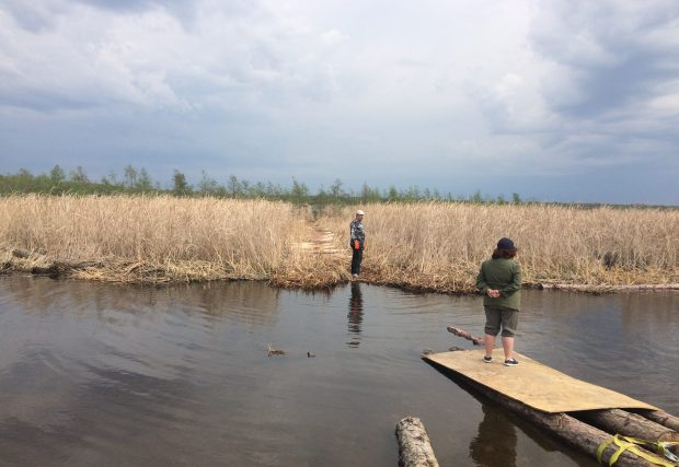 Minnesota American Legion and other volunteers succeeded Thursday, May 17, 2018, in cutting the giant North Long Lake bog into three sections. The bog came to rest on the beach of an American Legion camp. The plan is to move the middle section to open up the beach, then relocate the other two back to the bog's original position on the lake north of Brainerd, Minn. (Forum News Service)