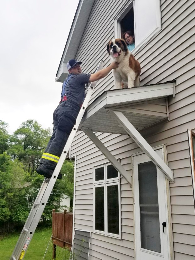 Firefighter David O'Keeffe helps to rescue a St. Bernard from a small roof above an entry door of a home in Spring Lake Park on June 8, 2018. (Anthony Scavo/Spring Lake Park-Blaine-Mounds View Fire Department via AP)