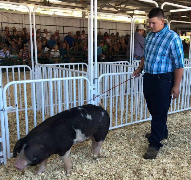 Wisconsin teen auctions pig to fight cancer bidders keep donating waylon klitzman walks one of two pigs he spent months raising and prepping for auction photo for the washington post by kim katzenmeyer thecheapjerseys Choice Image