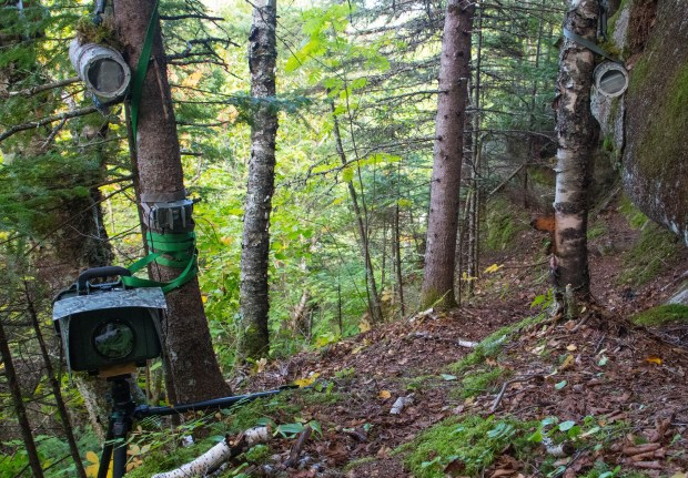 Wildlife camera trap tips from a Minnesota expert