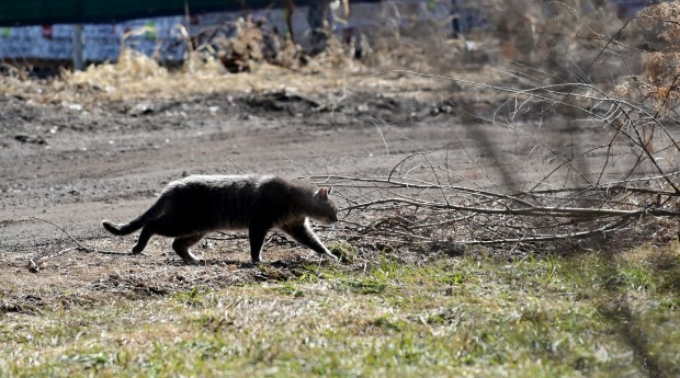 Cats multiplying in metro back yards as pandemic reduces animal-control reach