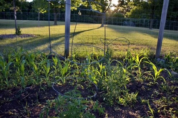 Burnsville to pilot 'food forest' at Civic Center Park