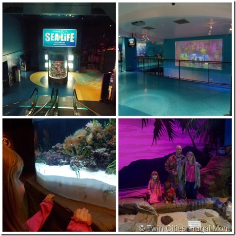 graphic relating to Mall America Printable Coupons known as Sea Lifestyle Minnesota Aquarium at the Shopping mall of The united states and 6