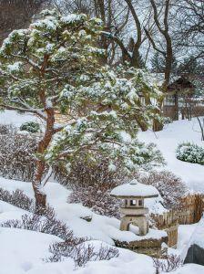 Photo courtesy Minnesota Landscape Arboretum