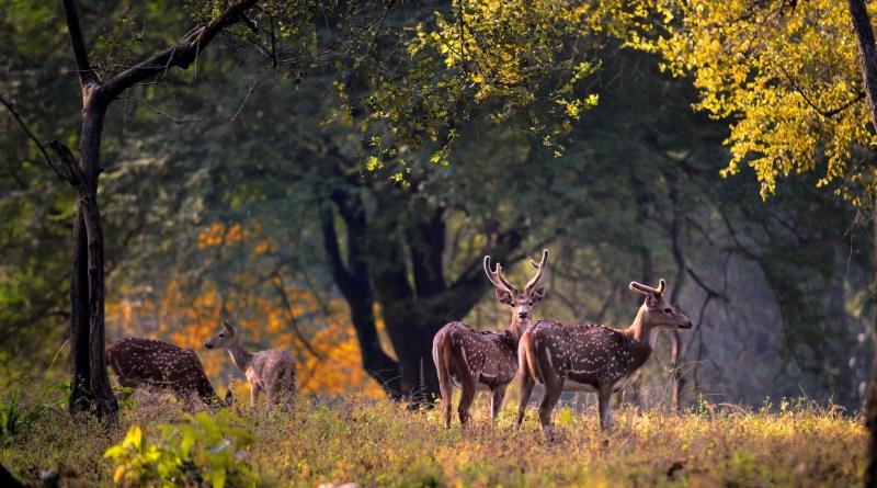 Best Wildlife Safaris in India