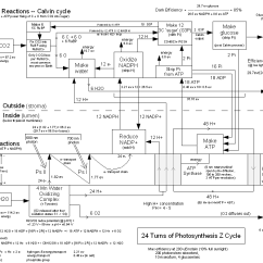 Diagram With Inputs And Outputs Of Photosynthesis Process Freightliner Columbia Wiring Twinkle Toes Engineering Z Cycle Energy Flows 24 Turns