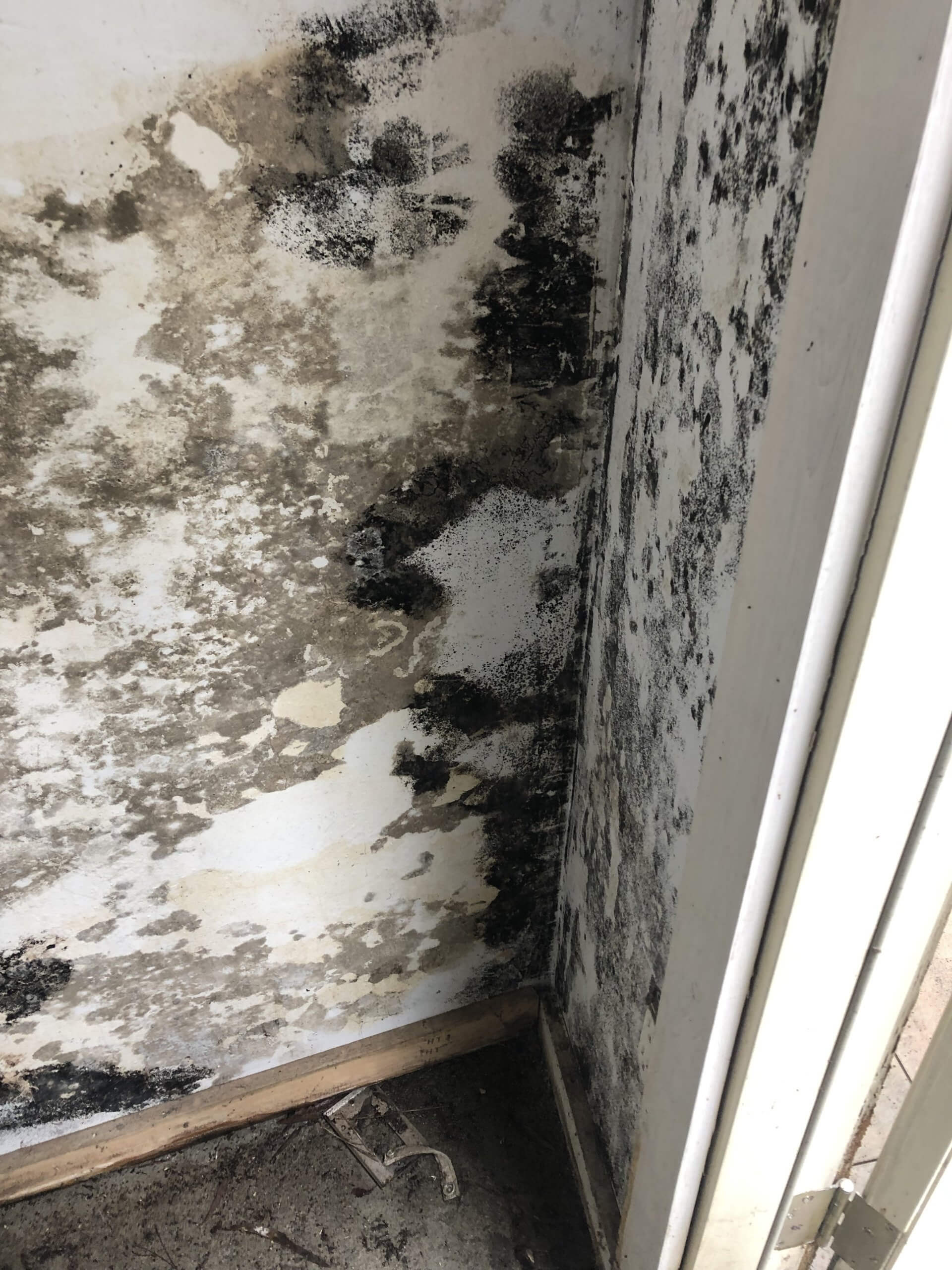 black mold under my sink is it