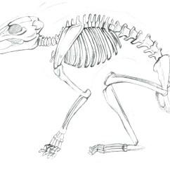 Rabbit Skeleton Diagram 2004 Chevy Impala Headlight Wiring Study Twisted Tales Studio