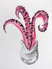 pink-fungi