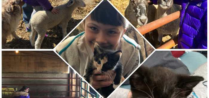 Lily with different animals. Cat, cow, lambs.