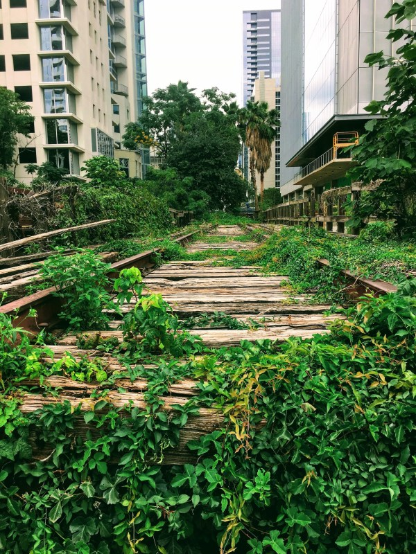 Old train tracks with vines growing on them.