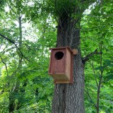 Owl box in a tree.