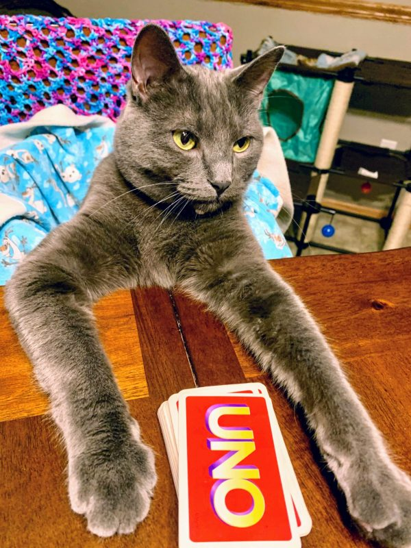 Cat playing Uno