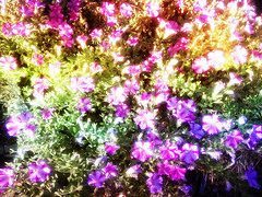 Pretty Colorful Flowers