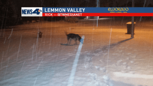 German Shepherd Loves Snow