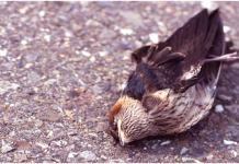 bird suicide