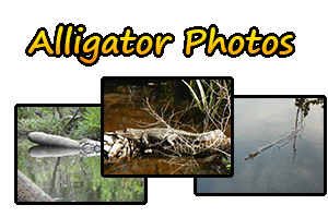 Great Activity For Thrill Seekers and Outdoor Enthusiasts in The Forgotten Coast- Air Boat Rides -Eco-Tours- Apalachicola River Basin