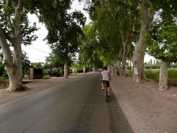 Vineyard bike self-guided bike tour