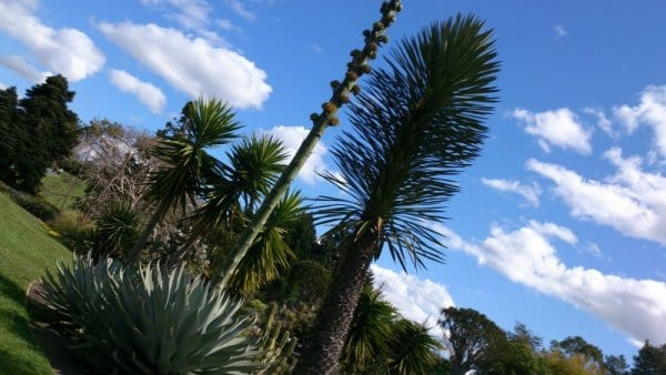 Botanic Gardens9